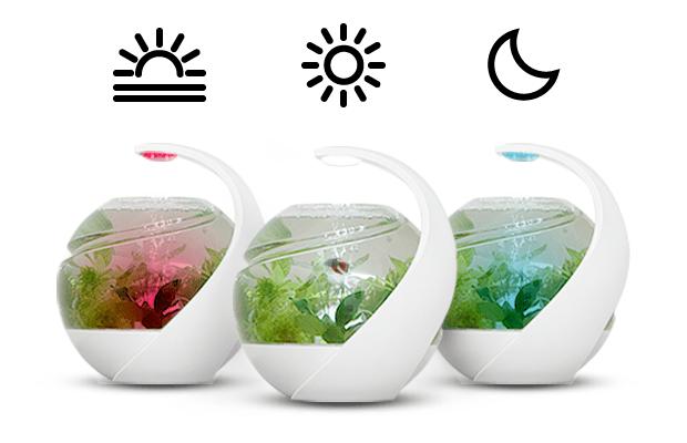 avo das selbstreinigende aquarium f r zuhause gadget rausch. Black Bedroom Furniture Sets. Home Design Ideas