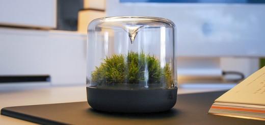 Air bonsai wenn pflanzen pl tzlich fliegen lernen for Blumentopf fliegen
