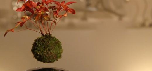 bonsai schwebender baum