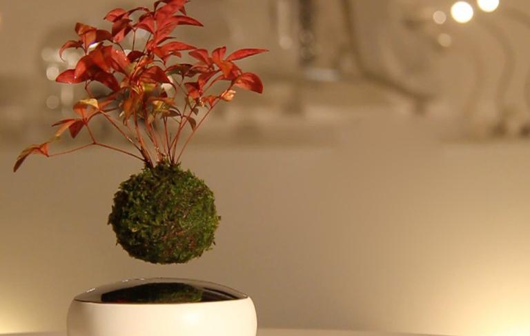 Air bonsai wenn pflanzen pl tzlich fliegen lernen for Bonsai pflanzen