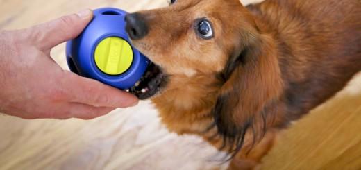 hunde futter spielzeug