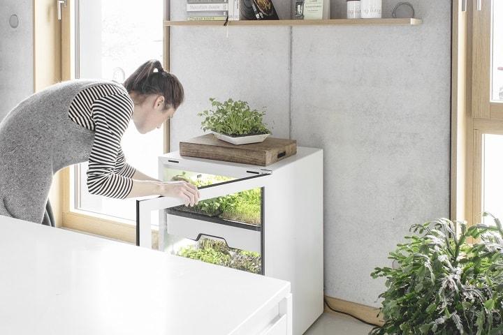 agrilution plantCube Salaternte