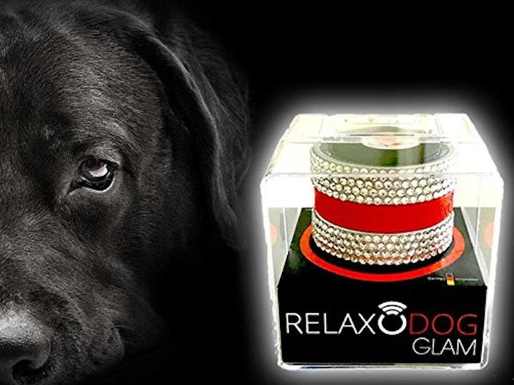Hund mit RelaxoDog Glam