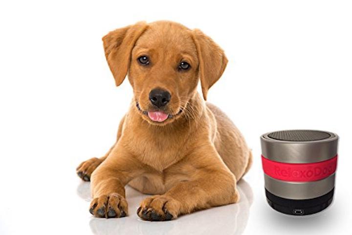 Hund mit RelaxoDog