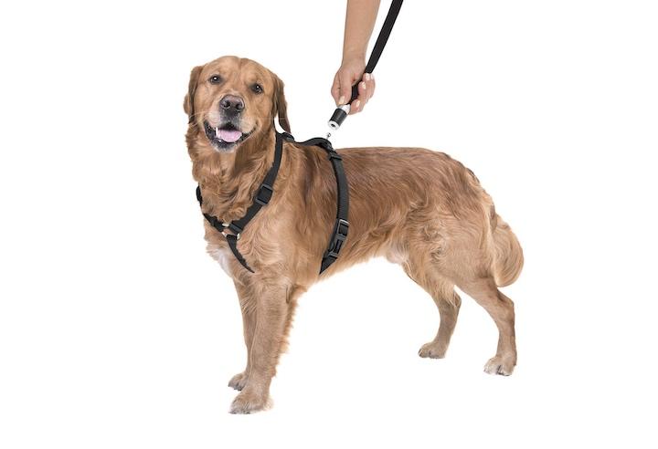 Goleygo Geschirr an Hund