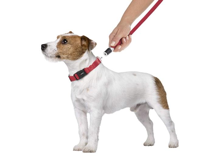 Goleygo Halsband an Hund