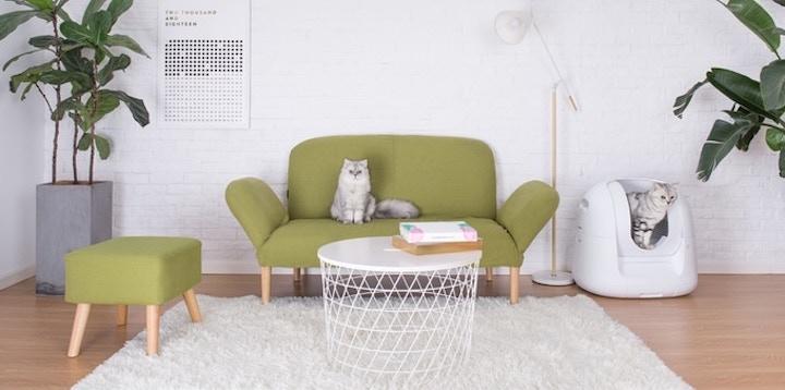 Katzen in Footlose und auf Sofa