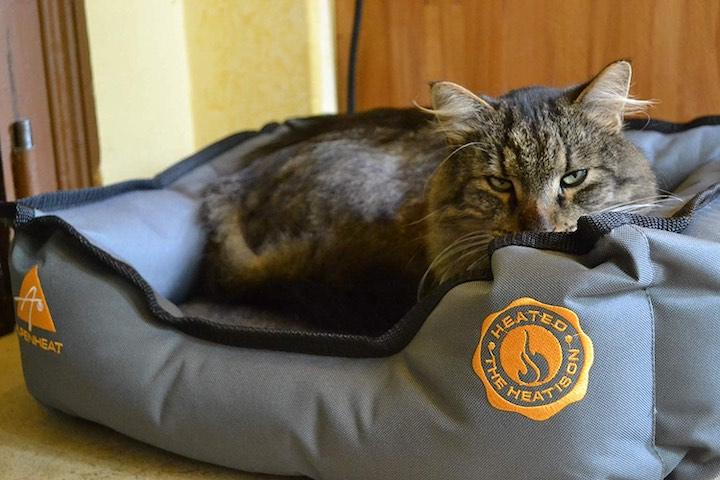 Alpenheat Katze