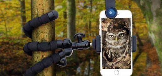 iPhone Baum Stativ 520x245