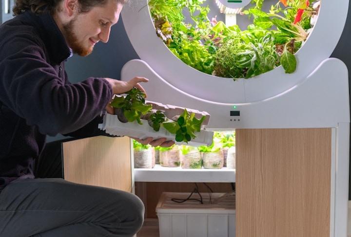 Mann pflanzt Steckling in Ogarden Smart