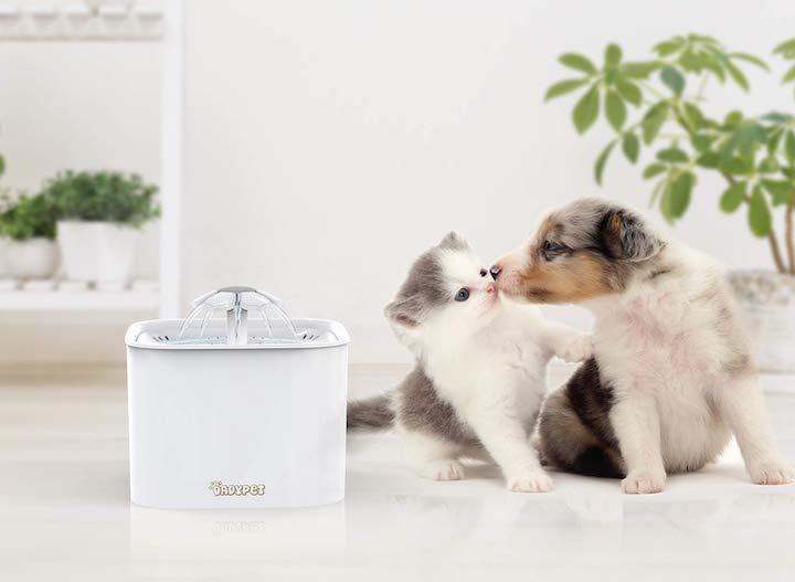 Hund und Katze neben DADYPET Trinkbrunnen