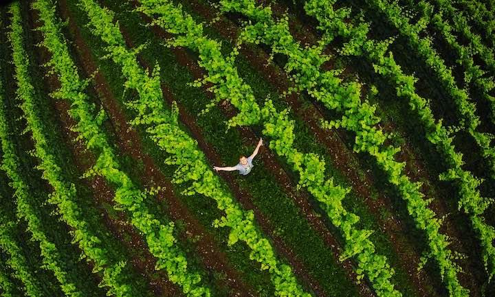 Weinpflanzen Mensch