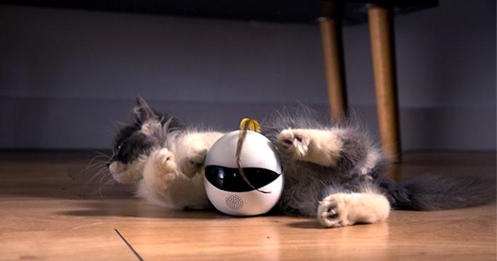 Katze Ebo Tischbein