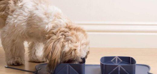 Pixie Lu Napfunterlage Hund 520x245