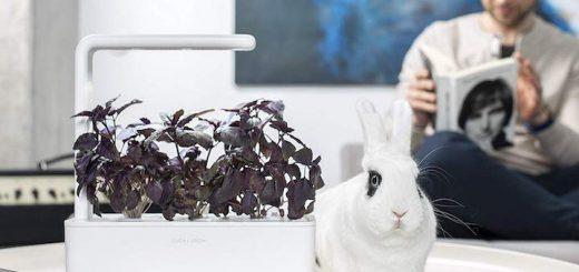Click and Grow Smart Garden 3 auf dem Tisch neben Hase