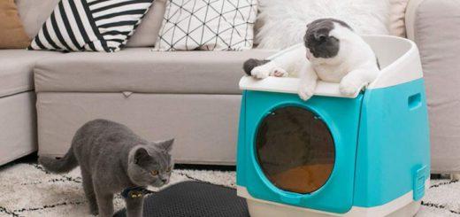 Katzenstreumatte Sofa Kissen Katze 520x245