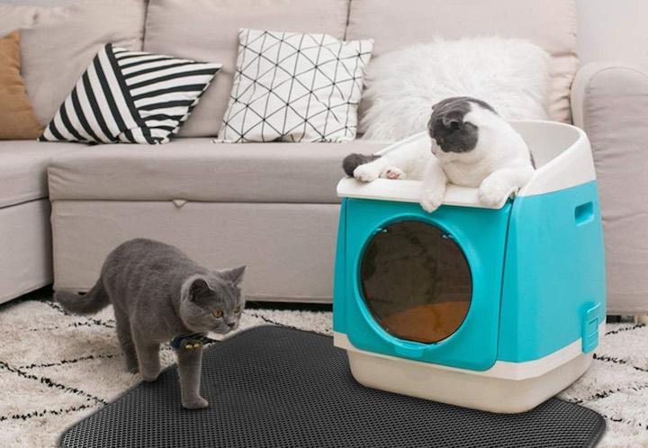 Katzenstreumatte Sofa Kissen Katze
