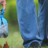 RoyalCare Hundekotgreifer Wiese Hand Jeans 160x160