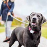Tractive GPS Tracker am Halsband Hund