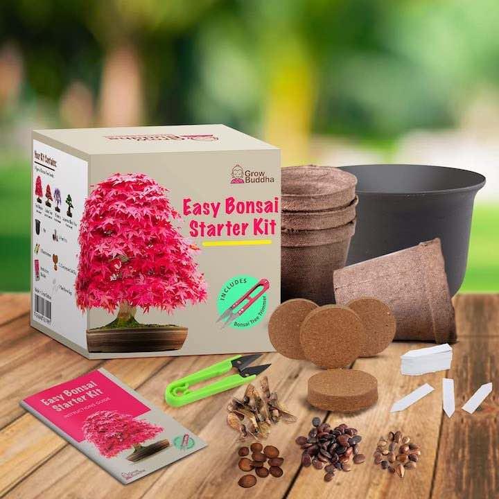 Bonsai Set Gadgets gegen Langeweile