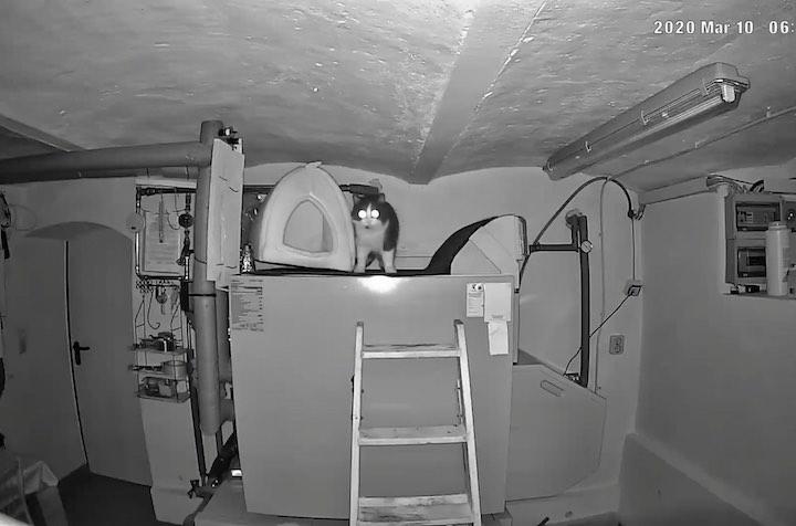 Nachtsicht einer %C3%9Cberwachungskamera mit Bild einer Katze und einer Leiter im Keller