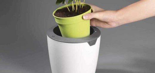 lazy leaf touchbedienung pflanzen 520x245