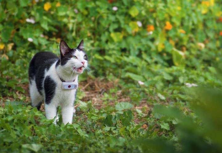 Weenect Cats 2 am Halsband einer Katze im Wald