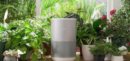Smartmi P1 zwischen vielen Pflanzen min 520x245