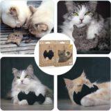 Katzen mit nachhaltigem Spielzeug 160x160